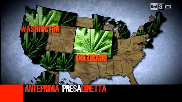 presadiretta-erba-del-vicino-cannabis