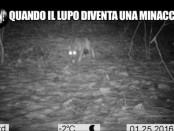 le-iene-lupi-1