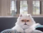 tim-gatto-620x264