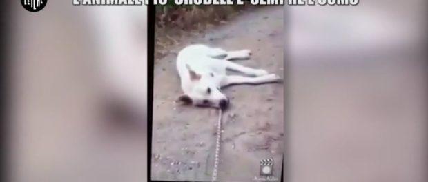 le-iene-cane-ucciso-a-bastonate-3